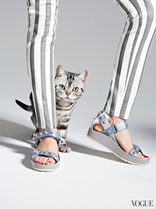 cats-kittens-flats-shoes-01_204106762856