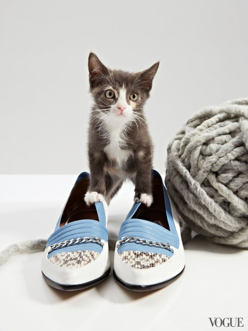 cats-kittens-flats-shoes-03_204107517011