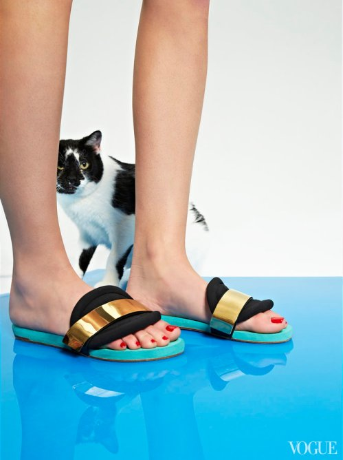 cats-kittens-flats-shoes-08_172731625587