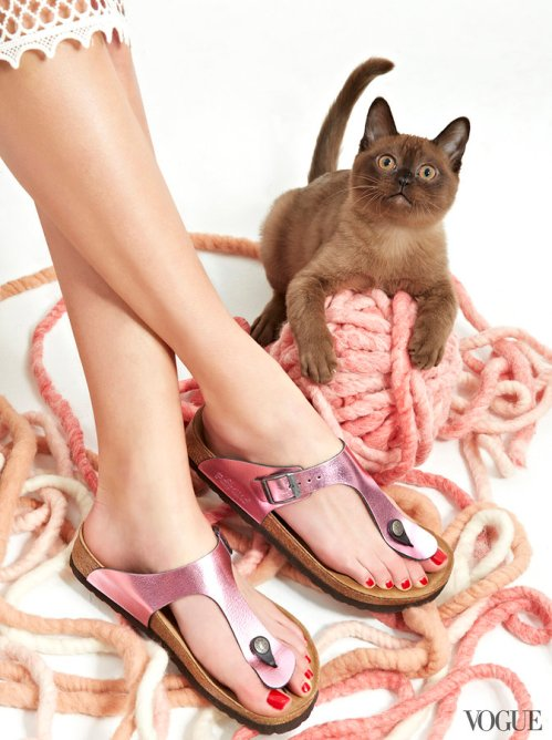 cats-kittens-flats-shoes-10_172732422236