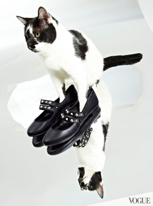 cats-kittens-flats-shoes-13_161858598560