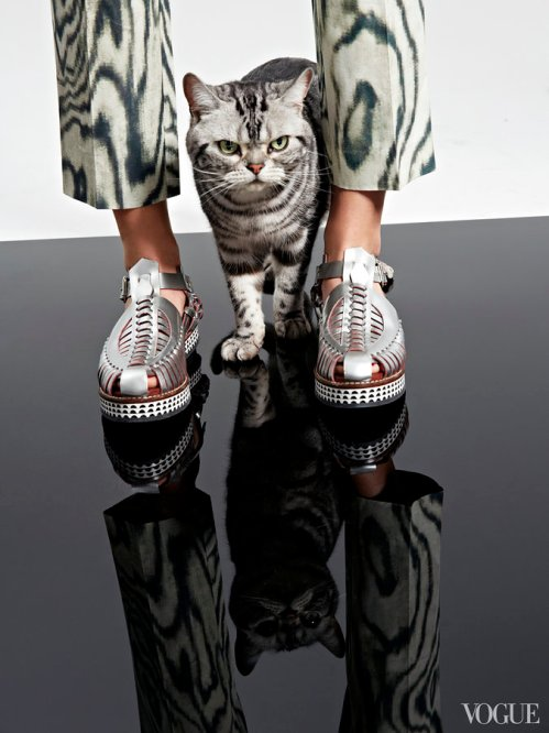 cats-kittens-flats-shoes-15_161900113747