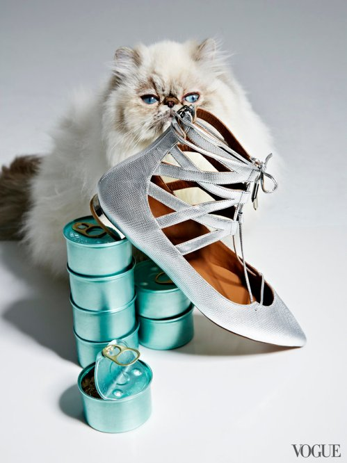 cats-kittens-flats-shoes-18_16190233655