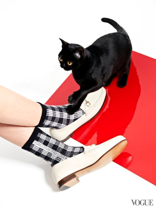cats-kittens-flats-shoes-22_16190580140