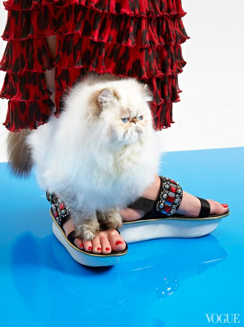cats-kittens-flats-shoes-23_161906768996