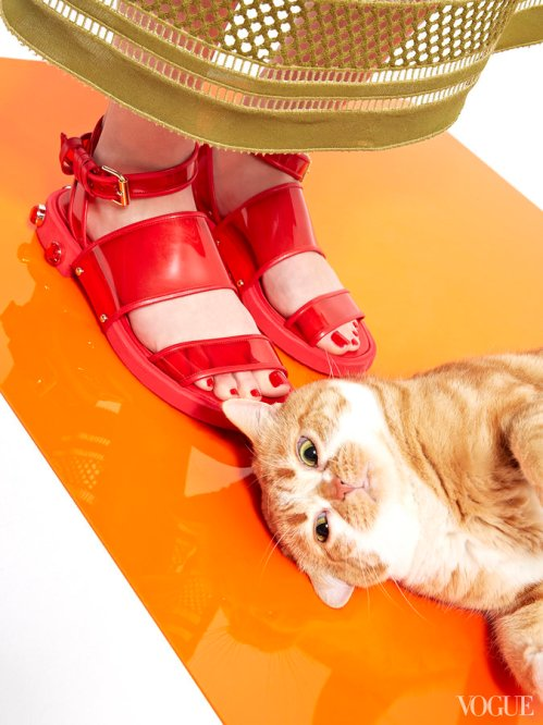 cats-kittens-flats-shoes-25_161908134491