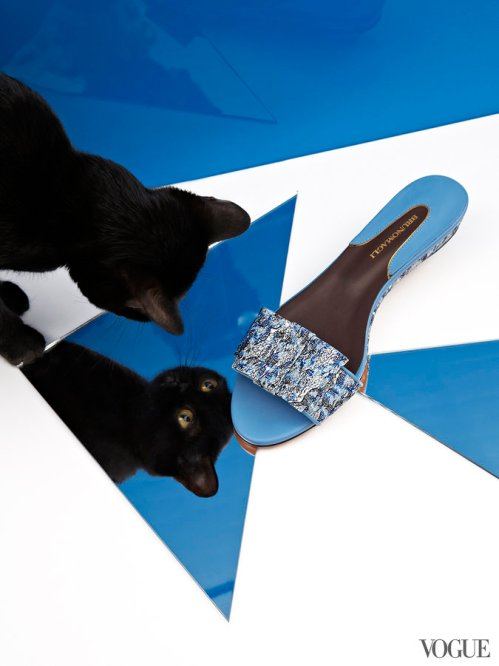 cats-kittens-flats-shoes-26_161909790805