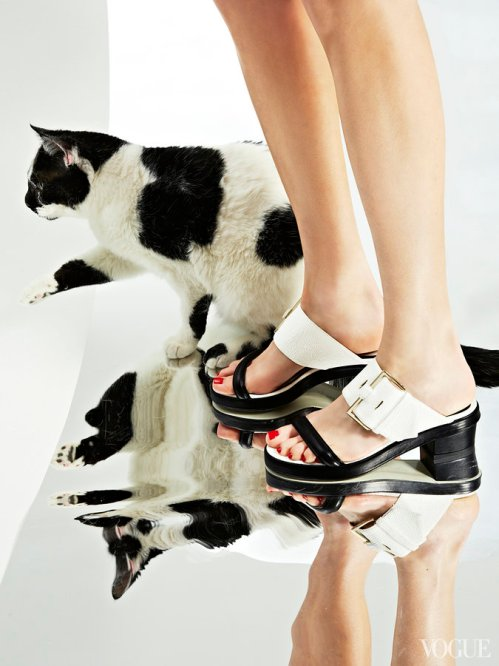 cats-kittens-flats-shoes-27_161909998465